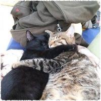 美猫・ぶさ猫・なごみ猫大募集! 素敵な投稿はスクリーンセーバーにも登場します。
