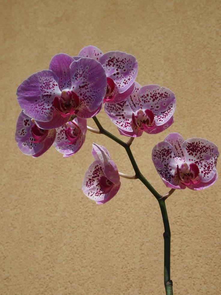 Crochet Flowers Tutorial By Carmen Heffernan : 46 best images about Kvety on Pinterest British columbia ...