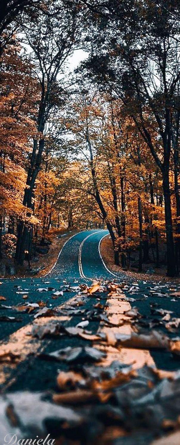 Autumn Fall Dreams