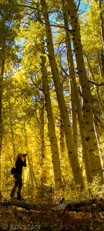 Juia, XplorMor Founder, photographs incredible Fall Colors of Aspen Grove along Lundy Canyon Trail, Inyo National Forest, California