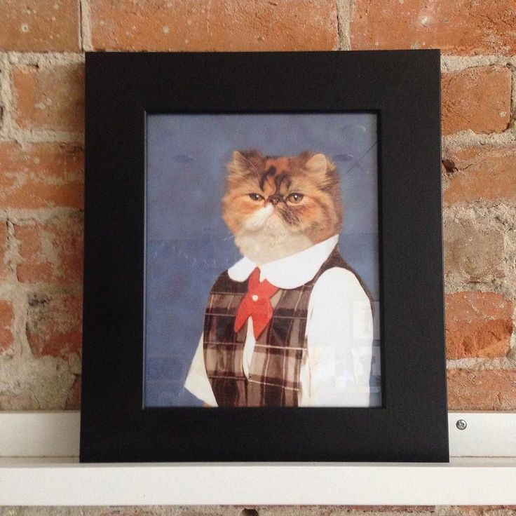 You probably need this.  http://ift.tt/1r2vUgo  #catsofinstagram #schoolportrait by cheerfullymade