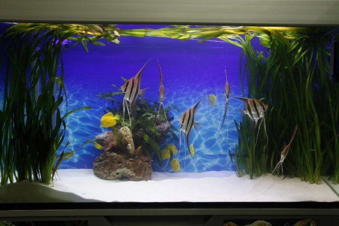 26 best images about fish tanks on pinterest aquarium for Aquarium recifal complet