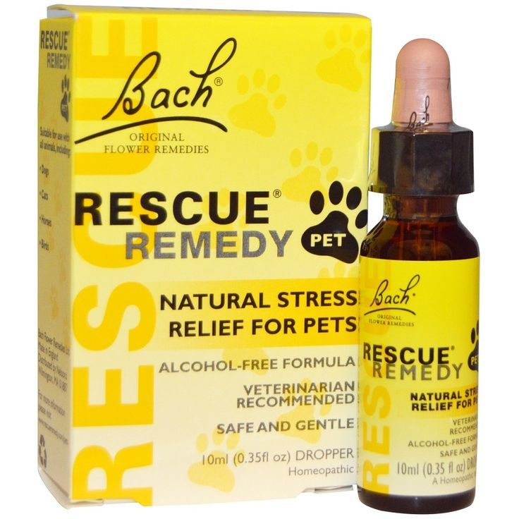 All Natural Stress Relief For Dogs
