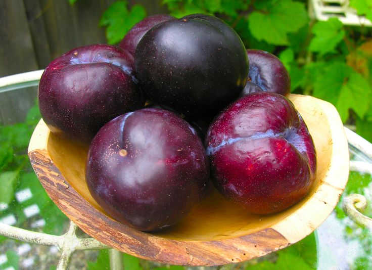 The black plum is known to relieve stomach pain, carminative, anti-scorbutic and diuretic. It is also good for diabetic patient as it helps convert starch into energy and keep blood sugar levels in check.  This fruit is also one of the 77 ingredients found in our KINGS Herbal Supplement.  Important Reminder: Kings Herbal has no approved therapeutic claims and should not be used as treatment for any kind of illness.
