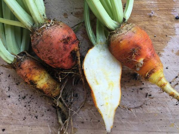 April in the Garden- The Humble Beet- Home Grown Happiness