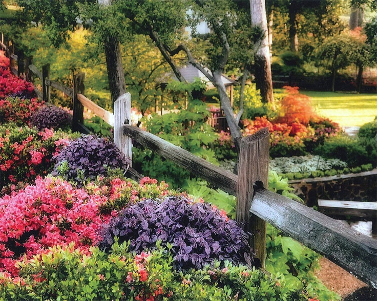 Come visit the City of Tyler's Azalea Trails, with beautiful historic homes and flowers in full bloom.