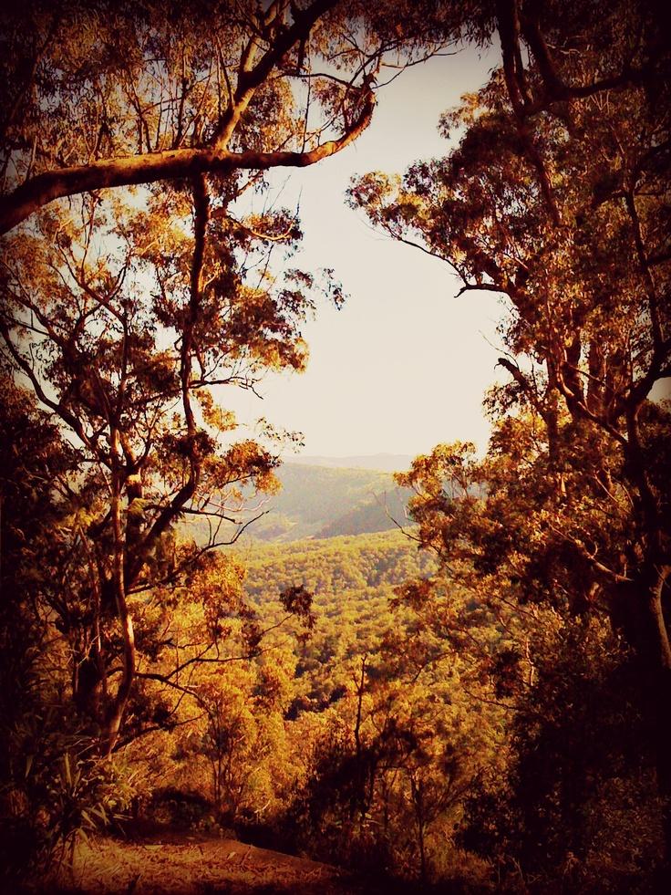 Lamington National Park in Queensland, Australia.
