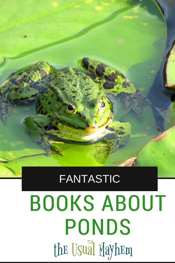 Pond books for kids: There are so many creatures that live in a pond! Here are some amazing books to help get you started exploring all of them.
