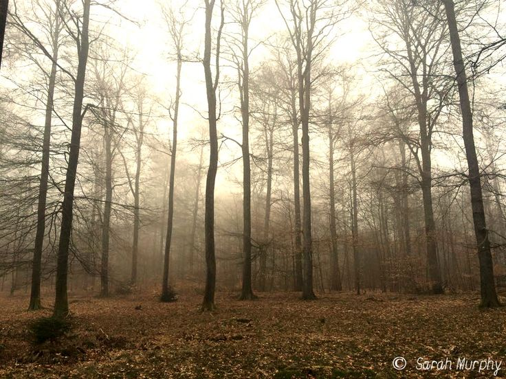 Misty forest near Namur in Belgium