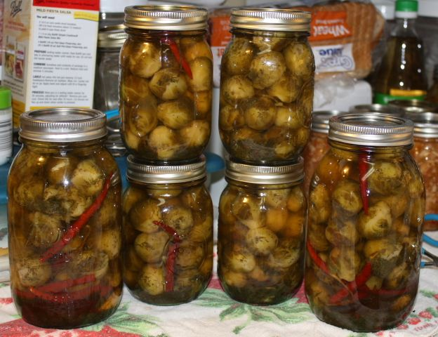 Hot spiced Brussels Sprouts  2lbs Brussels Sprouts 21/2 cups water 4 heads dill 21/2 cups vinegar 1t cayenne pepper 4 garlic cloves (opt) 3T pickling salt 4 heads dill (opt) 2 jalapeno peppers or 1 habanero pepper