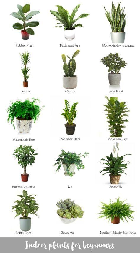Zimmerpflanzen für Anfänger