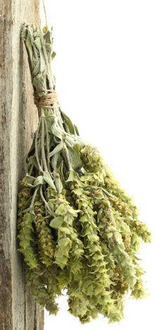 Greek mountain tea : Sideritis, The Humble ~used in herbal medicine, skincare & raw material for perfumery via Fragrantica (Elena Vosnaki)