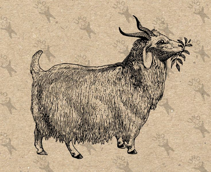 Vintage image Goat with bell Farm Country Black White Instant Download Digital printable retro drawing clipart graphic tote kitchen HQ300dpi by UnoPrint on Etsy