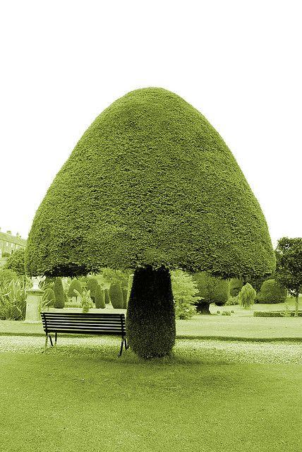 .topiary