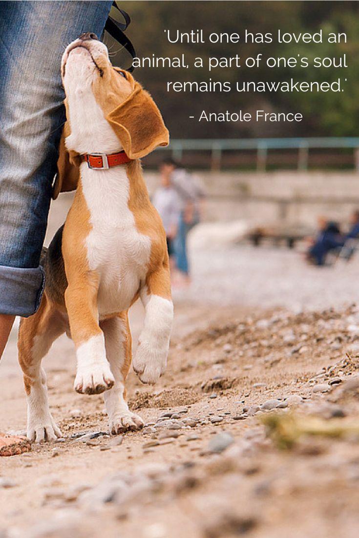 """""""Mientras no hayas amado a un animal, una parte de tu alma permanece dormida."""" Anatole France"""