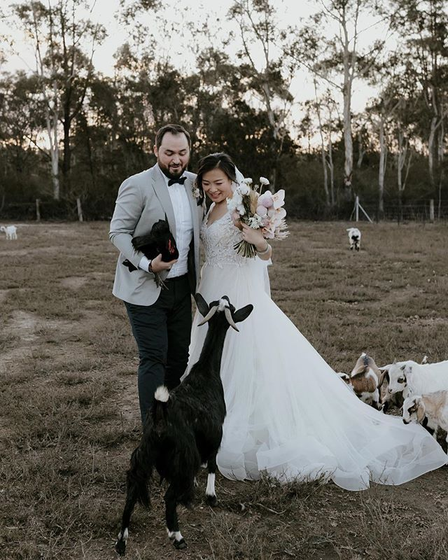 Local Inspiration Zoemorleyphotography Oh No These Wedding Guests Are Way Too Cute What A Perfect Little Bay Wedding Highland Wedding Wedding Magazine