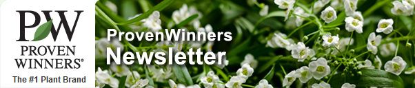 Proven Winners for your garden
