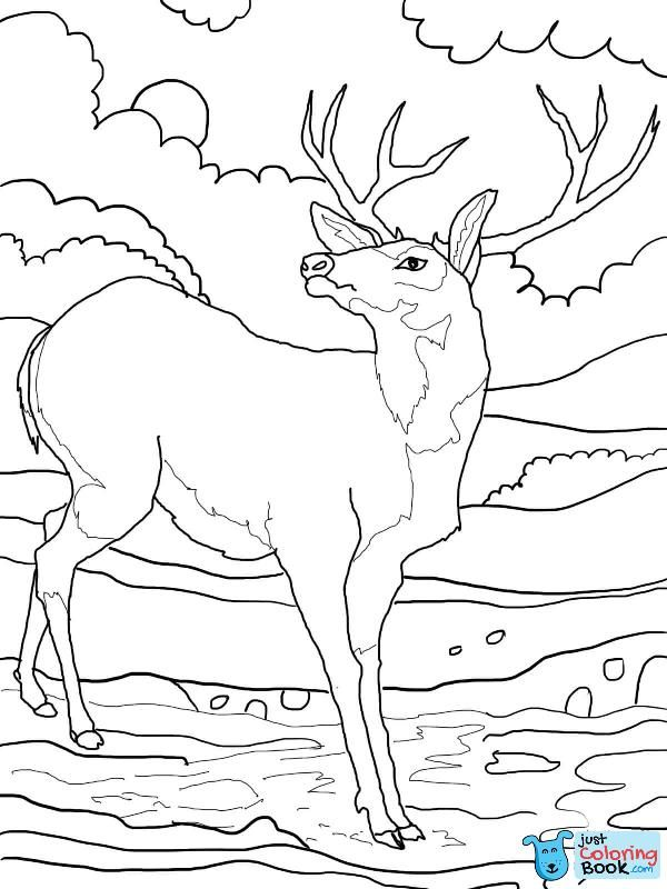 Black Tailed Mule Deer Coloring Page Free Printable With Mule Deers Family Coloring Pages Deer Coloring Pages Horse Coloring Pages Family Coloring Pages