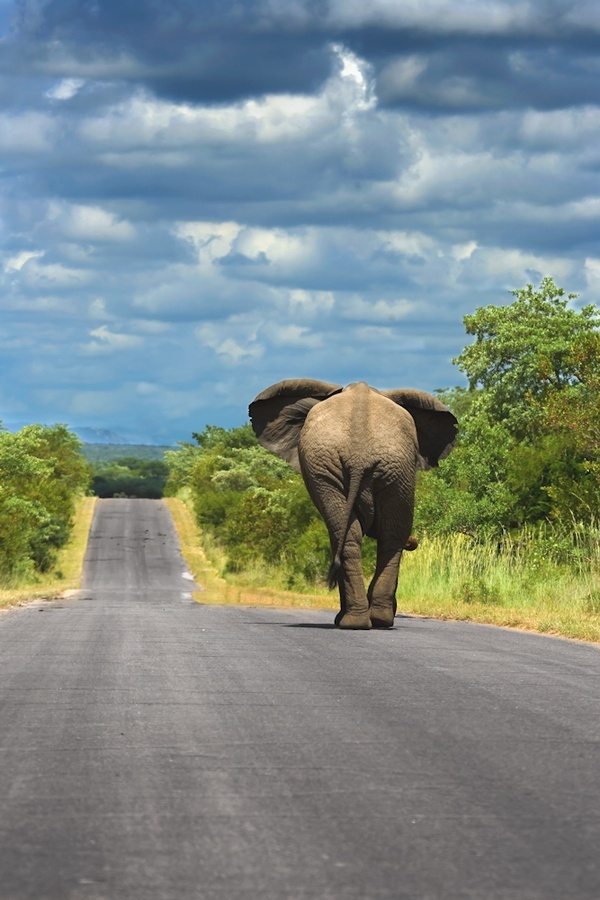 Imagine seeing this walking down the road... Only in Africa.