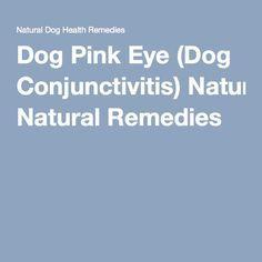 Dog Pink Eye (Dog Conjunctivitis) Natural RemediesKarina Maldonado