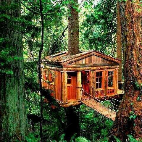 La casa del árbol que todos deseamos.