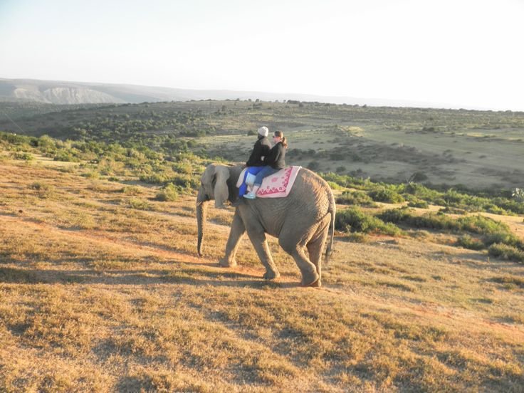 Traveling in South Africa: riding an elephant at Kwantu Elephant Sanctuary (near Grahamstown and Port Elizabeth)
