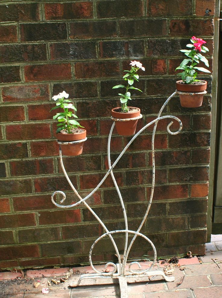 Old wrought iron plant display