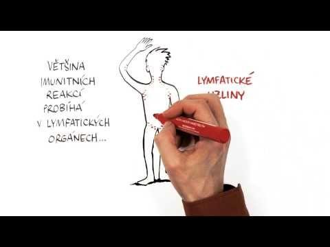 7. díl: Jak funguje naše imunita - YouTube