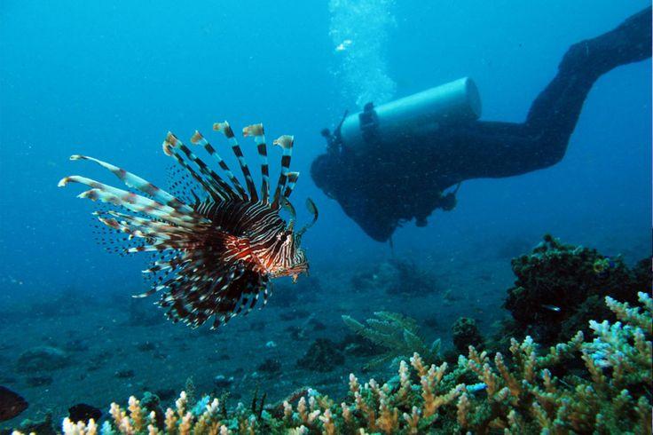 Inspiring Wonderful Indonesia Bunaken with Bunaken In Indonesia | Goventures.org
