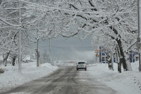 Snows sits on the canopy of branches on Forest Street in Yarmouth, looking towards Main Street and the Yarmouth sign on the lower part of Forest Street that heads down towards the ferry terminal.   Tina Comeau photo/Yarmouth Vanguard