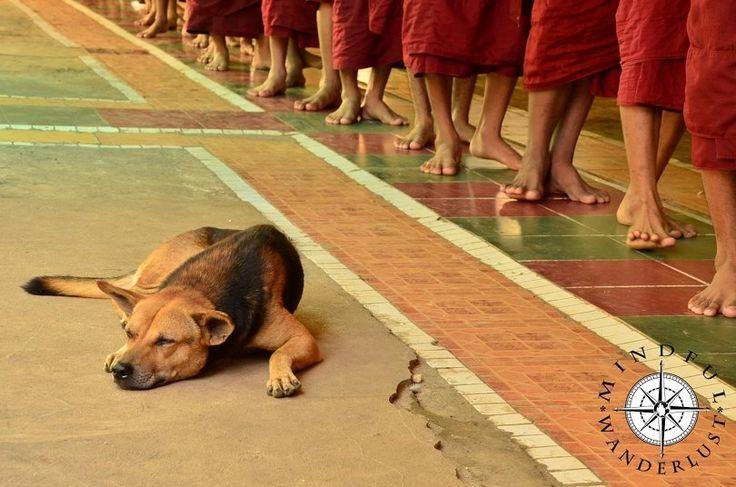 Dog with Burmese monks