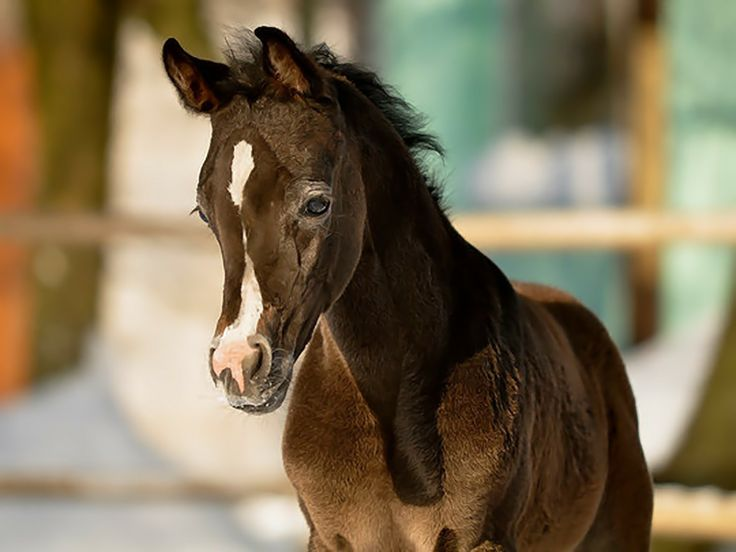 cute baby foals - photo #4