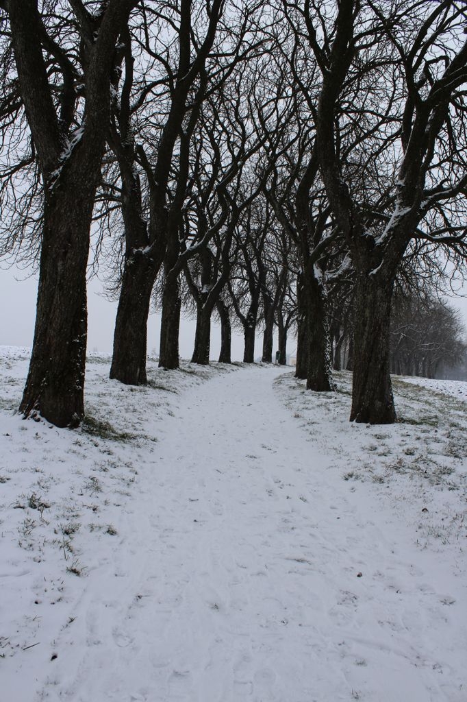 Walking trough a lonley Wood in Winter