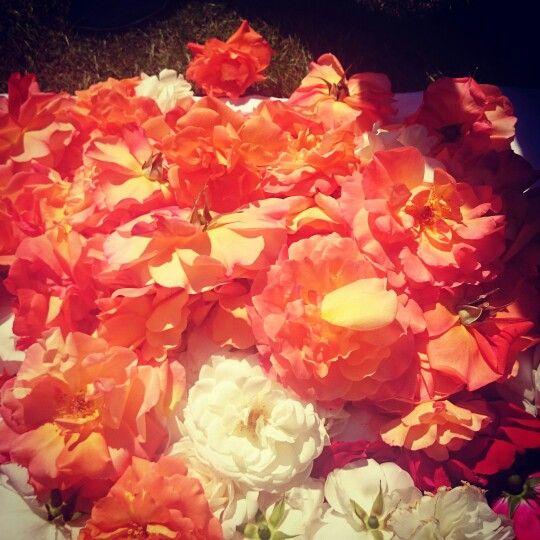 Heute habe ich Rosenblätter für die Mondtöchter gesammelt. Auf Grund ihrer positiven, verjüngenden Wirkung auf die Haut, machen wir daraus Gesichtswässer und Badesalze.  Schon die Weisen Frauen von früher wussten, dass die Rose eine reinigende und erfrischende Wirkung auf die Haut hatte, weshalb reiche Frauen auch in ihnen badeten.