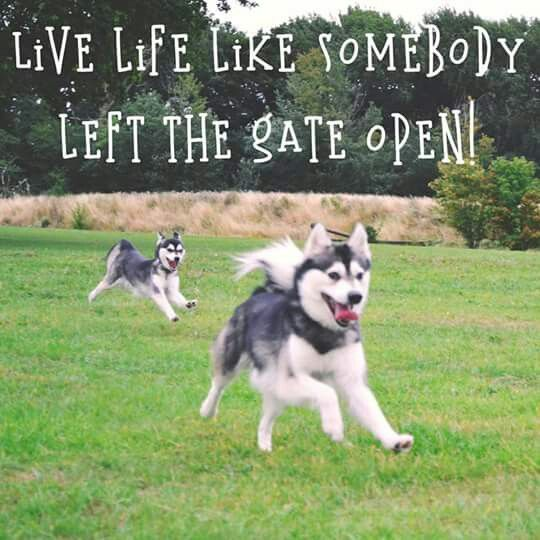 Happy Husky Puppies live life like somebody left the gate open