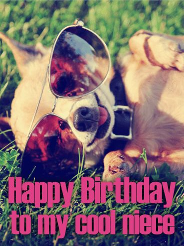 Send Free Furry Chihuahua Happy Birthday Card for Niece to Loved Ones on Birthday & Greeting Cards by Davia. It's 100% free, and you also can use your own customized birthday calendar and birthday reminders.