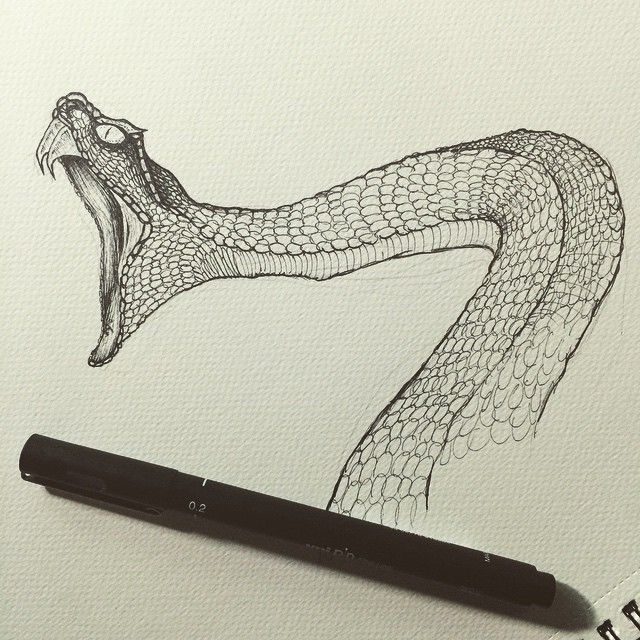 how to draw snake scales