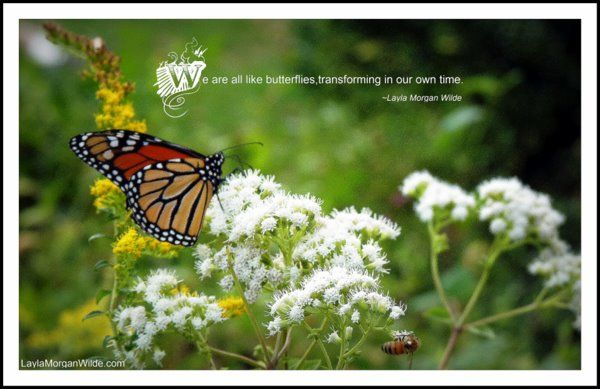 143 Best Butterfly Inspiration Images On Pinterest