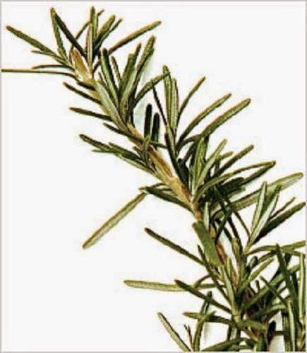 Cura pela Natureza.com.br: Benefícios do chá de alecrim