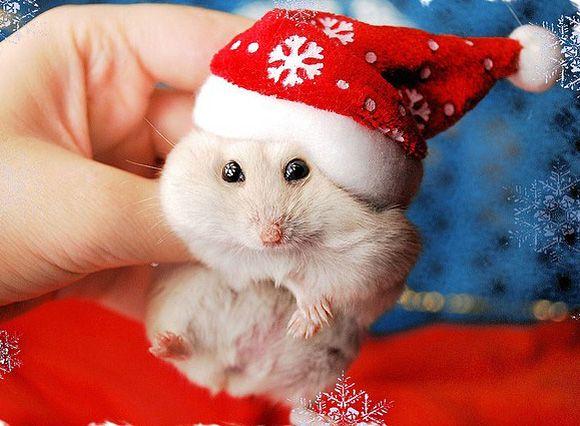 Who knew Santa was so teeny tiny? #cute #animals #christmas