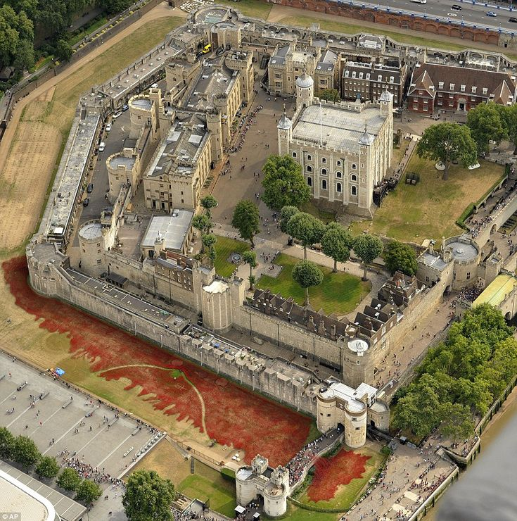 Astonishing sight: A sea of 888,246 red ceramic poppies in the Tower of London's dry moat by artist Paul Cummins...