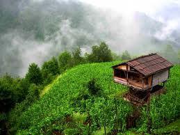 Rize Tea fields....