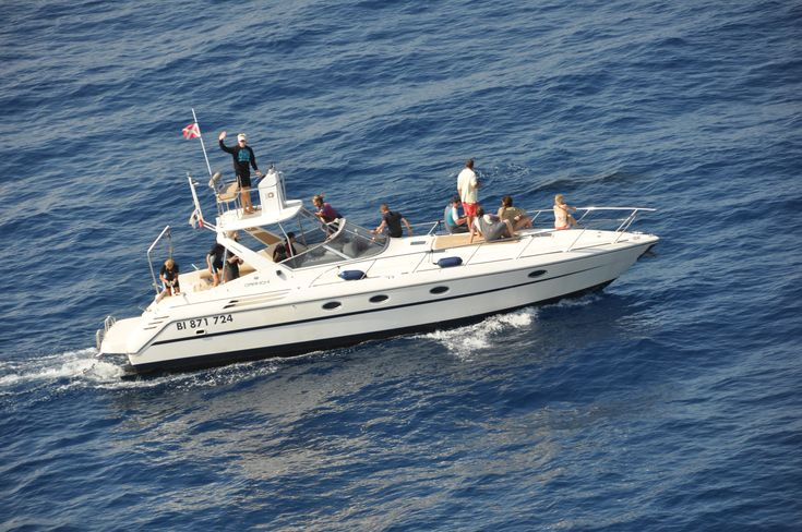 """La luxueuse vedette """"Cala Rossa"""" pour effectuer une sortie pour nager avec les dauphins"""