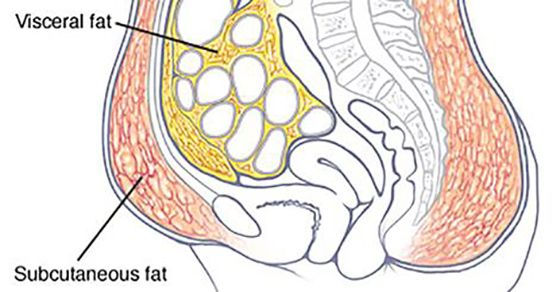 Simple Techniques to Help You Lose That Belly Fat