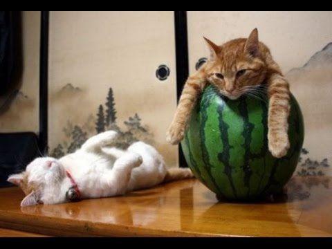 Спящие коты в смешных позах