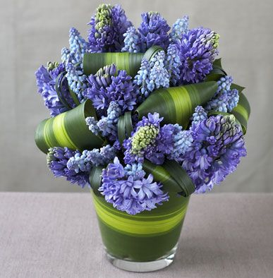Arranging cut garden flowers.  Muscari | Blue Hyacinth, Muscari, Striped Cordyline via ultraviolet-flowers.net