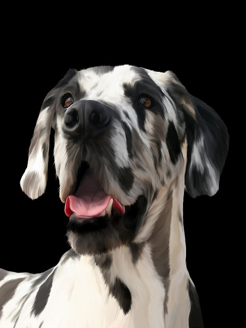 he so handsome!: Dogs Danes, Great Dane Dogs, Harlequin Great Danes, Pet, Amazing Dogs, Artistic Dogs, Greatdanes, Big Dogs