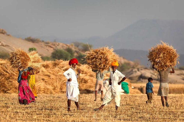 Village Trail:Tours are definitely one of the best things to do in Udaipur. Another fascinating tour that you can take is the Village Tour, complete with the leader being an expert in organic farming who takes you on a tour which can last anywhere from 4-8 hours, depending on you.