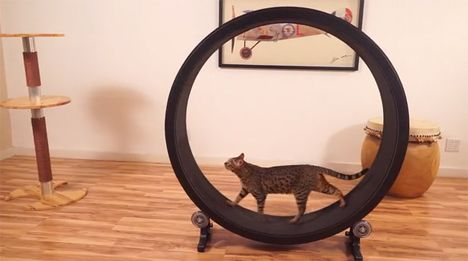 No More Fat Cats: Giant Hamster Wheel Keeps Cats Trim