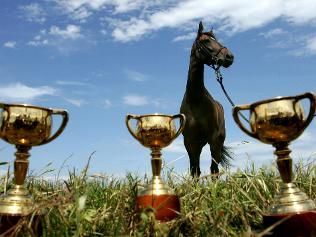 Makybe Diva & her 3 Melbourne Cups.